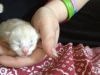 Oasis Animal Rescue - Kittens Born 1