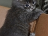 Daisy\'s kitten - adopted