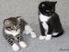 oasisanimalrescue_kittens_bridgetpenguin
