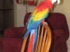 Angus\' new friends - a colourful parrot
