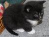 oasisanimalrescue_kitten_blaze