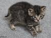 oasisanimalrescue_kitten_bobby3