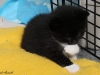 oasisanimalrescue_kitten_penguin2