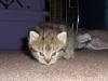 Kitten, Having a look around