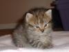 Comfortable kitten on blanket
