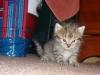 Kitten exploring the house