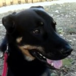 Coda | Forever Home Found