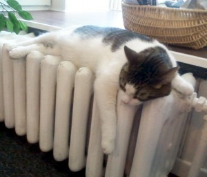 Black and white cat on a radiator