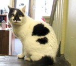 Oasis Animal Rescue - Buttercup
