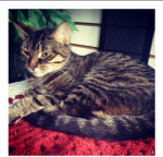 Leopold | Forever Home Found!