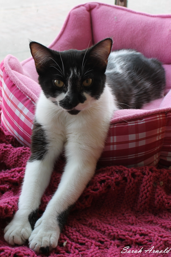 Adopt Princess the cat - Oasis Animal Rescue