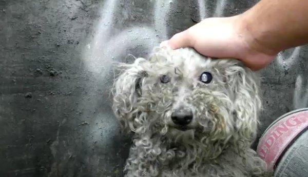 Pet Rescue Fiona Los Angeles