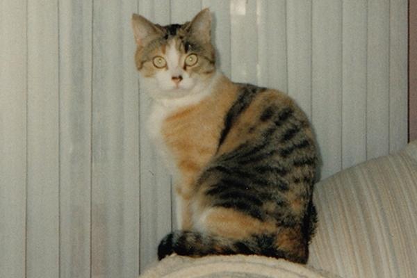 Adopt Sable - Oasis Animal Rescue
