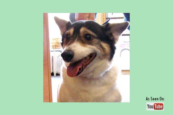 Adopt Molly - Oasis Animal Rescue