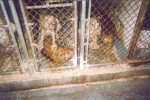 Puppy Mills Are A Big, Dirty Business – Part 1