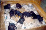 Puppy Mills Are A Big, Dirty Business – Part 2