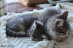 Boots and Blair Abandoned No More – Forever Home Found