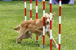 Oasis Animal Rescue at Dog Days of Scugog July 14-15/2012