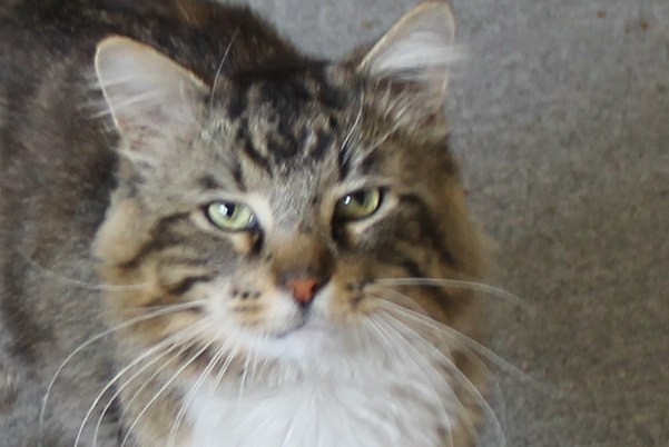 Adopt Barnaby - Oasis Animal Rescue