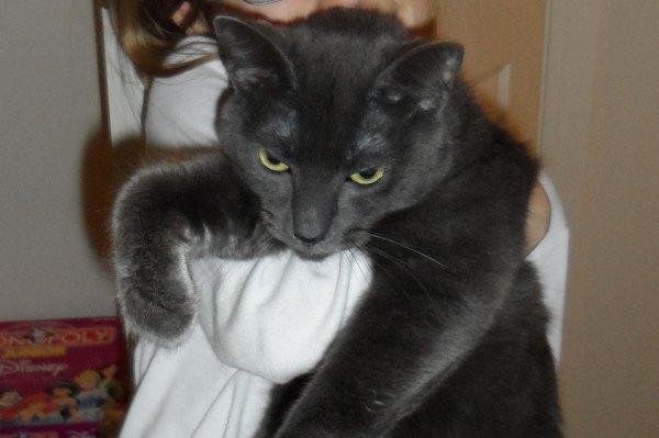 Adopt Moe - Oasis Animal Rescue