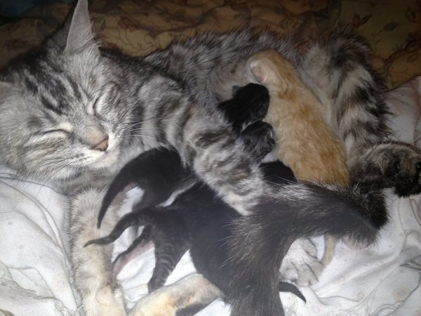 Amy and her four newborn kittens - Oasis Animal Rescue