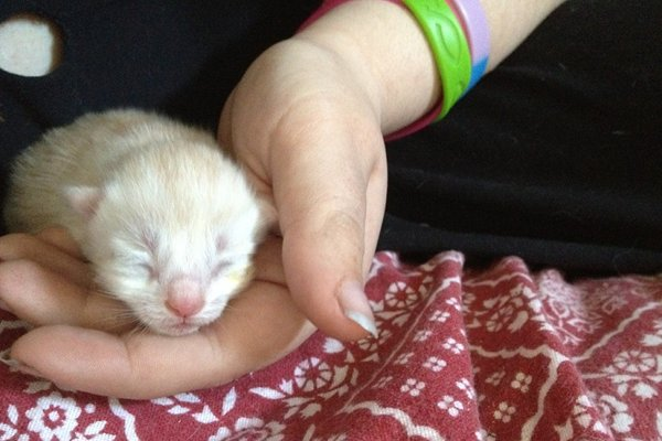 Oasis Animal Rescue Kittens Born to Rescue cat Amy