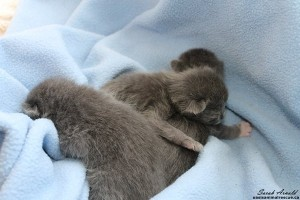 Abandoned Kittens In Durham Region, Oasis Animal Rescue