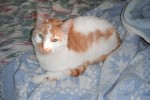 Adopt Braveheart - Rescue Cat - Oasis Animal Rescue