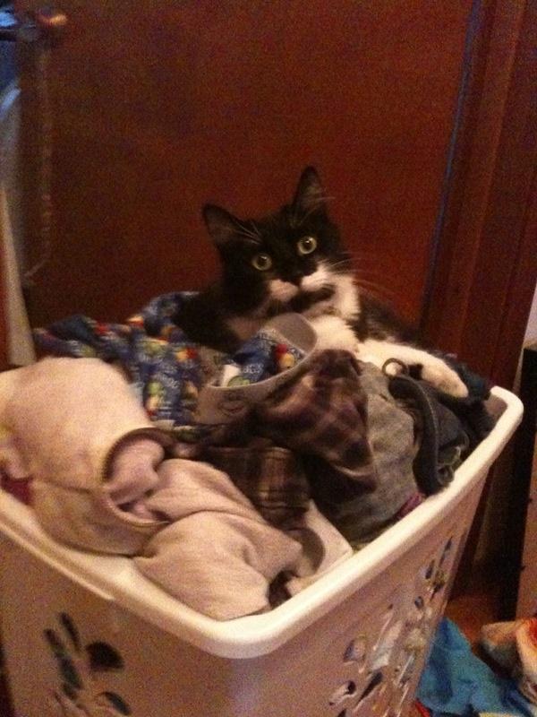 Adopt Chloe - Oasis Animal Rescue, Durham Region