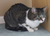 A Stable New Home Would Be Fantastic For Cat Maximus