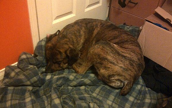 Dog Buddy - For Adoption