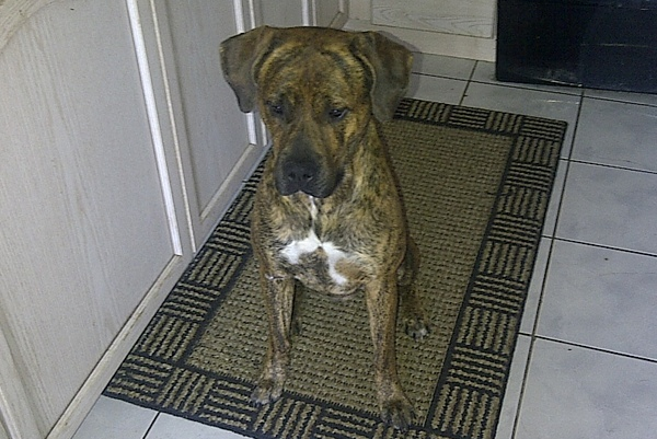 Adopt Dog Buddy. Oasis Animal Rescue