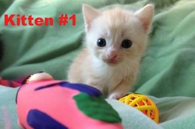 Kitten #1 is now called Oscar