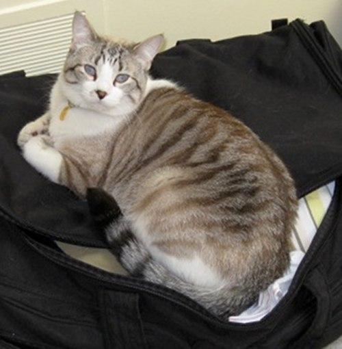 Adopt Cat Kelev