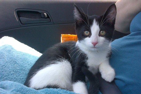 Adopt kitten named Moo
