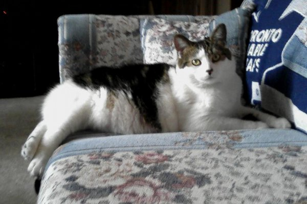 Adopt Cat Rocky