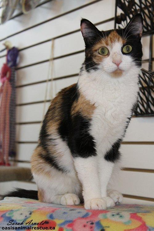 Adopt Cat Named Rebecca