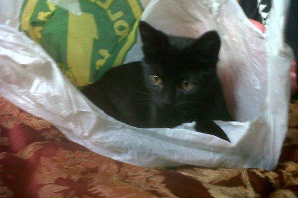 Adopt this kitten named Jasper