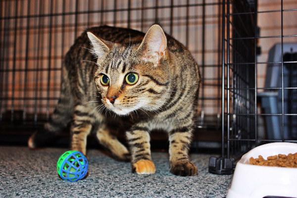 Adopt cat Sophee