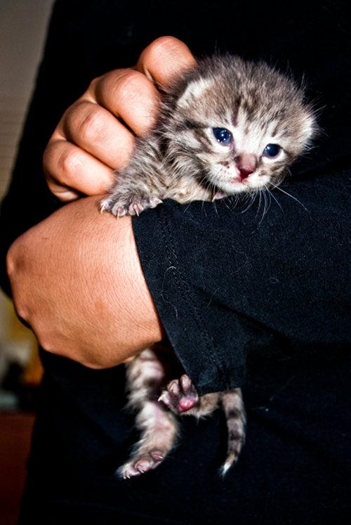 Rescue Kitten Stewie