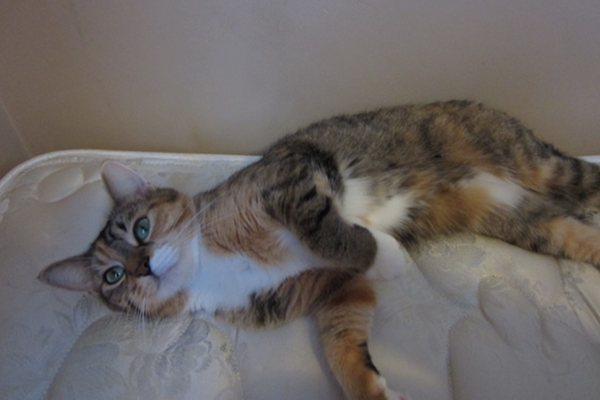 Rescue stray cat Emma