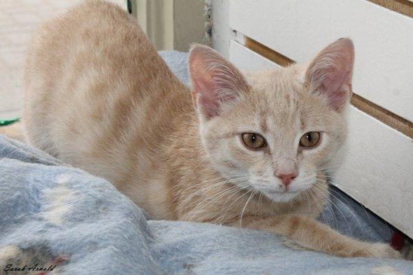 Rescue kitten Caesar