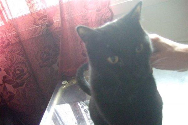 Adopt cat named Asia