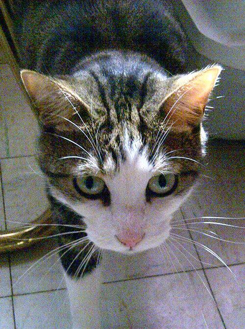 Adopt cat named China