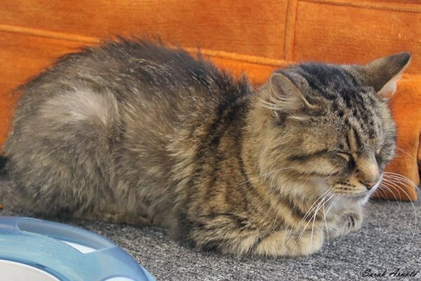 Rescue Cat Precious