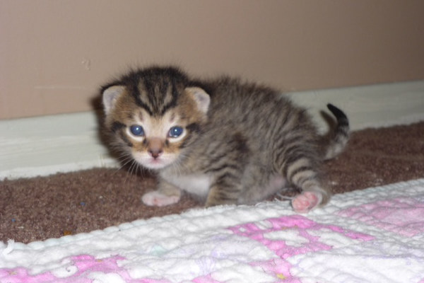 cute photo of Bandit the kitten