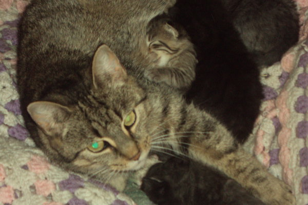 adopt cat Blair and her 4 kittens