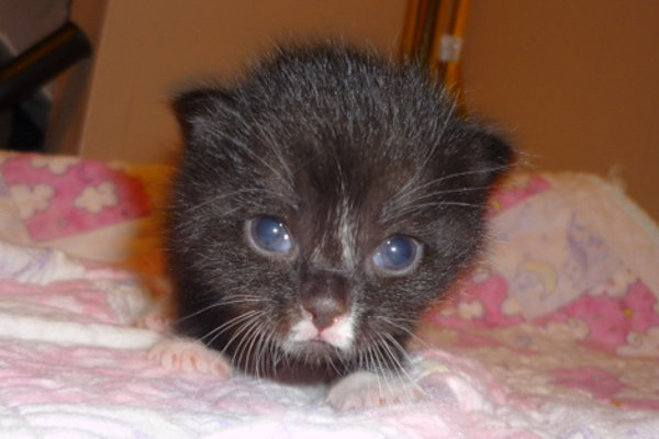 kitten named Eve
