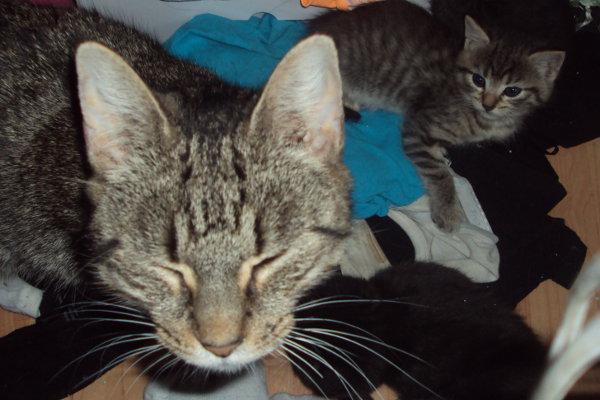 Cat Blair and her kitten