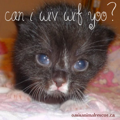 "Cute kitten saying ""Can I wiv wif yoo?"
